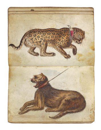 Twee liggende jachtluipaarden, 15de eeuw. Foto: Studio Tromp, Rotterdam.