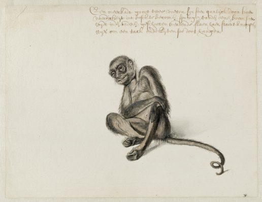 Frans Post (1612-1680), Slingeraap, ca. 1638-1644. Noord-Hollands Archief, Haarlem.