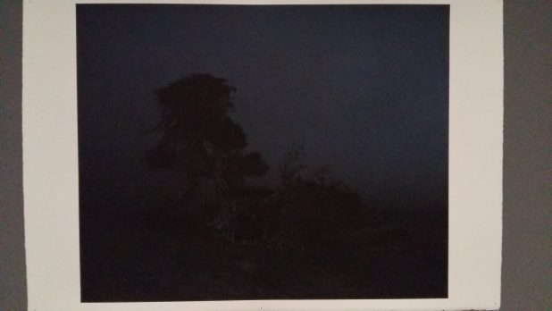 Craigie Horsfield, The tree at the edge of the World, Sabinar. La Dahesa, El Hierro. 38 minutes, just before dark, March 2008, 2008.