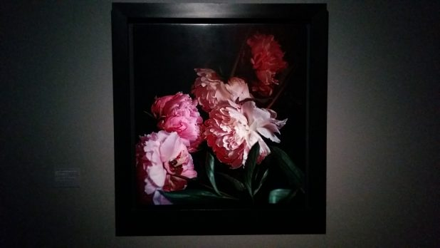 Craigie Horsfield, Five Peonies, via Chiatamone, Naples May 2010, 2013.